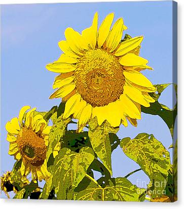Sunflowers In Morning Canvas Print by Artist and Photographer Laura Wrede