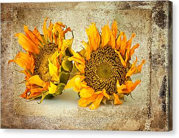 Sunflowers No 413 Canvas Print