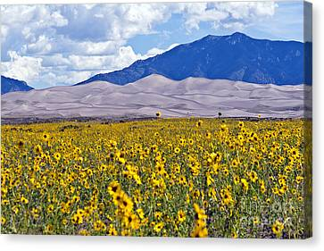 Sunflowers On The Great Sand Dunes Canvas Print
