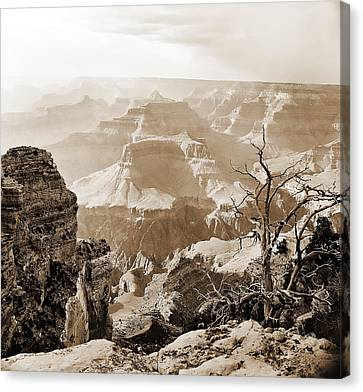 Sunlight In The Grand Canyon Canvas Print by M K  Miller