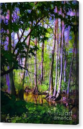 Sunlight In The Swamp Canvas Print by Judi Bagwell
