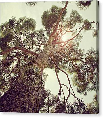 Sunlight Passing Through Branches Of Tree Canvas Print by Sbk_20d Pictures