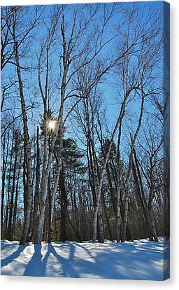 Sunlight Through Birches Canvas Print by Mary McAvoy
