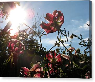 Sunlight Through Flowers Canvas Print