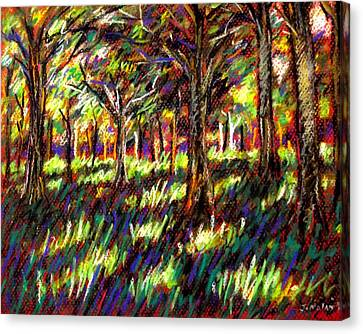 Giclee Trees Canvas Print - Sunlight Through The Trees by John  Nolan
