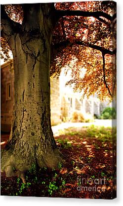 Presence Canvas Print - Sunlit Church by HD Connelly