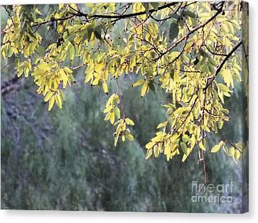 Sunlit Tree Canvas Print by Tammy Herrin