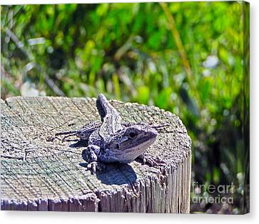 Sunning Canvas Print by Joanne Kocwin