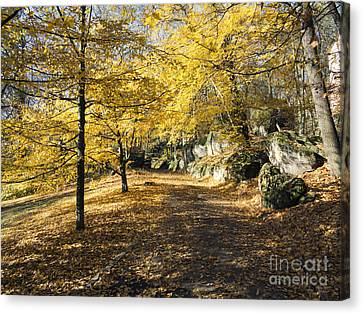 Sunny Day In The Autumn Park Canvas Print by Michal Boubin