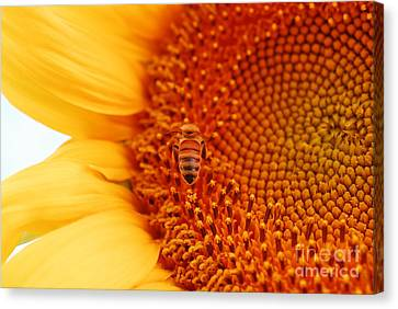 Canvas Print featuring the photograph Sunny Day by Laurianna Taylor