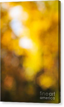 Sunny Fall Forest Canvas Print by Elena Elisseeva