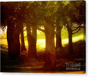 Sunny Glade Canvas Print by Lutz Baar