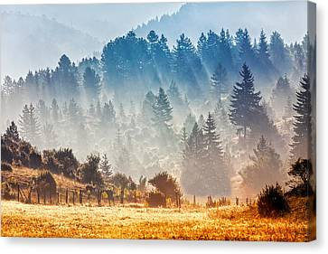 Sunny Morning Canvas Print by Evgeni Dinev