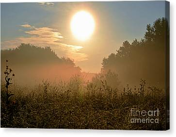Sunny Side Up Canvas Print by Sue Stefanowicz