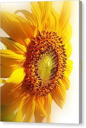 Sunny Softness Canvas Print by Lynnette Johns