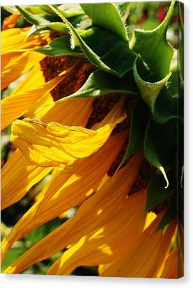 Sunny Times Canvas Print by Bruce Bley
