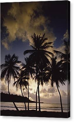 Sunrise At La Sagesse Bay Over Marquis Canvas Print by Gerry Ellis
