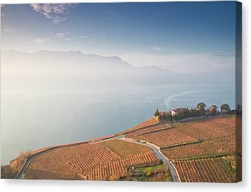 Sunrise At Lavaux Vineyard Terraces Canvas Print by Harri's Photography