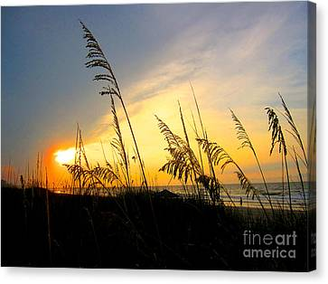 Sunrise Behind Sea Oats Canvas Print by Julie Bostian