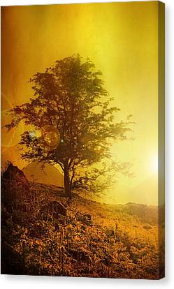 Sunrise Flare Canvas Print by Svetlana Sewell