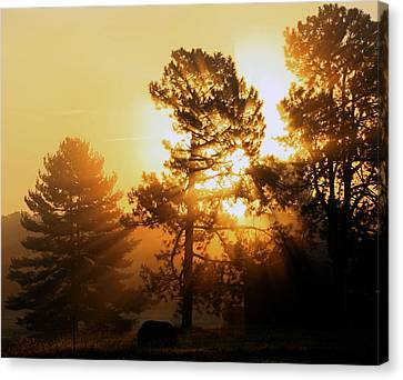 Sunrise Canvas Print by Karen Harrison