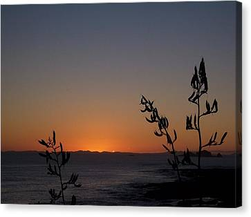 Canvas Print featuring the photograph Sunrise On East Coast Of North Island 2 by Peter Mooyman