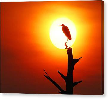 Sunrise Sentinel Canvas Print by Jessie Dickson