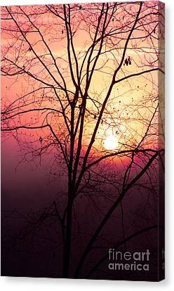 Sunrise Sunset Canvas Print by Kim Fearheiley