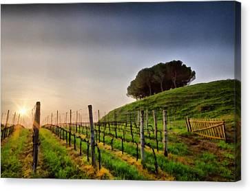 Sunrise Through The Vineyards Canvas Print by Matteo Zonta