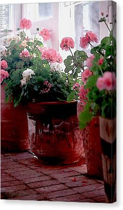 Sunroom With Geraniums Canvas Print by Elaine Frink