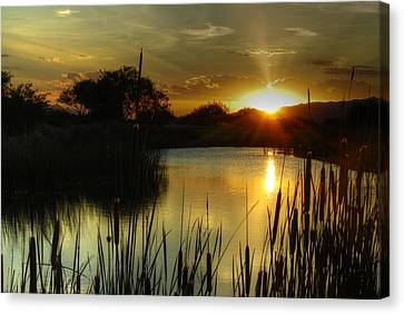 Sunset And Cattails Canvas Print by Tam Ryan
