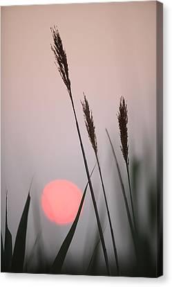 Sunset At The Beach Canvas Print by Steve Gravano