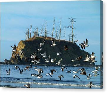Canvas Print featuring the photograph Sunset Bay Scape And Gulls by Cindy Wright