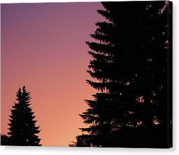 Canvas Print featuring the photograph Sunset Between Two Evergreens by Brian Sereda