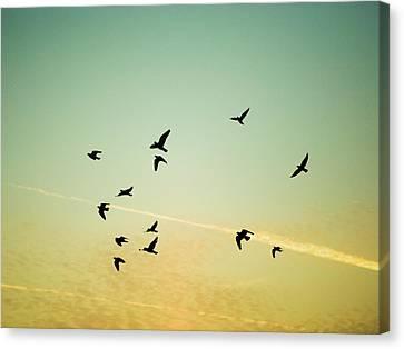 Sunset Birds Canvas Print by Sarah Palmer