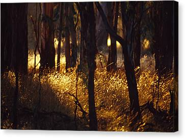 Sunset Falls Over Seeding Grasses Canvas Print by Jason Edwards