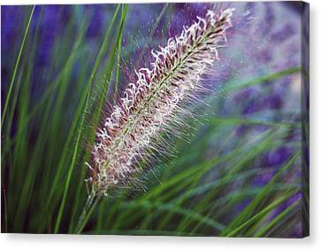 Sunset Garden Canvas Print