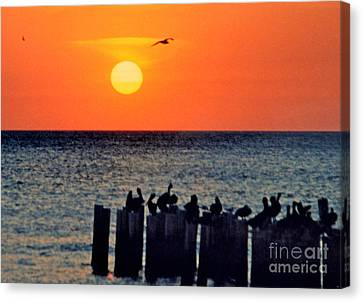 Canvas Print featuring the photograph Sunset In Florida by Lydia Holly