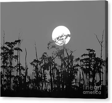 Canvas Print featuring the photograph Sunset In Swamp by Luana K Perez