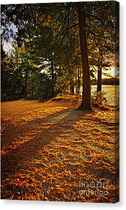 Sunset In Woods At Lake Shore Canvas Print by Elena Elisseeva