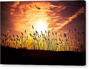 Canvas Print - Sunset Inferno by Alhaji Samura