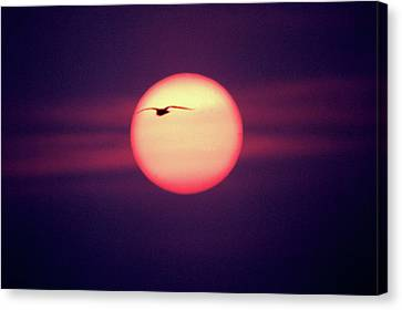 Sunset Canvas Print by John Foxx
