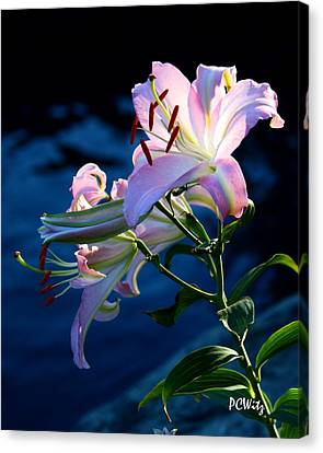 Canvas Print featuring the photograph Sunset Lily by Patrick Witz