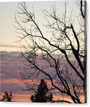 Sunset Of Winter's Beauty Canvas Print by Naomi Berhane