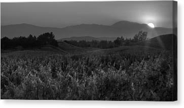 Sunset Over The Vineyard Black And White Canvas Print