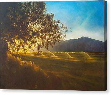 Sunset Over The Watering Fields Canvas Print