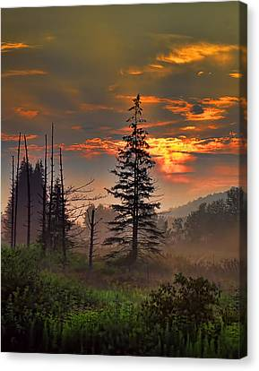 Sunset Pine Canvas Print
