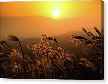 Sunset, Reeds And Wind Canvas Print by Douglas MacDonald