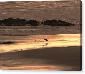 Sunset Shimmer Beach Canvas Print by Debra     Vatalaro
