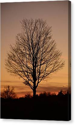Sunset Silhouette Canvas Print by Cathy Shiflett